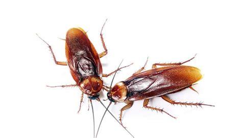 Qué Significa Soñar con Cucarachas Grandes. ¡Revelaciones ...