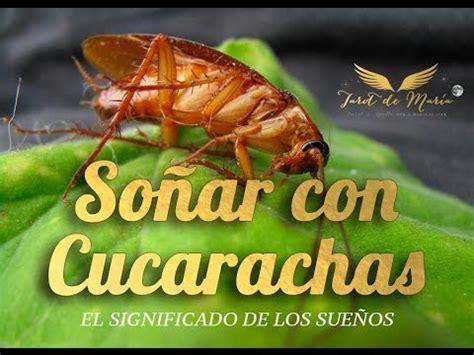 Qué Significa Soñar con Cucarachas - YouTube