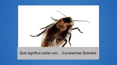 Qué significa soñar con… Cucarachas Grandes - YouTube