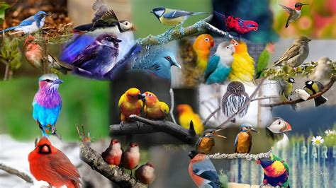 ¿Qué son las aves?