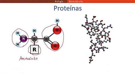 Qué son las biomoléculas