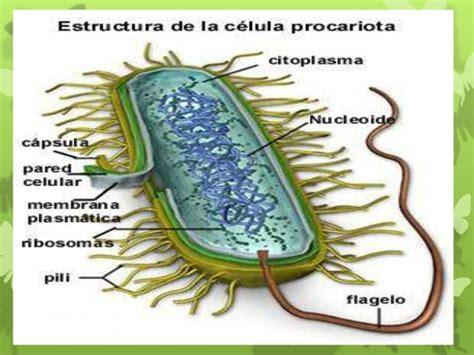 Que son las Celulas Procariotas | TUSALUDESVIDA