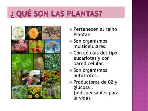 Qué son las plantas  1