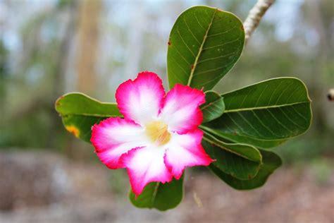 ¿Qué son las plantas exóticas?