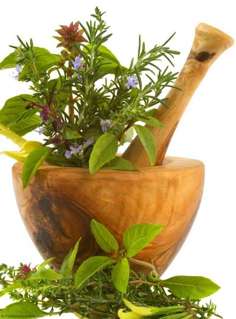 ¿ Que son las plantas medicinales ?  Plantas Medicinales ...