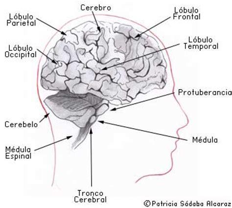 ¿Qué son los tumores del sistema nervioso central ...