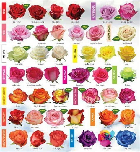 ¿Qué tipos de rosas existen? » Respuestas.tips