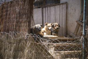 ¿Quién ayuda a Noé? | Cataluña | EL PAÍS