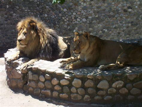 Quieren prohibir los zoológicos en Córdoba   Argentina ...