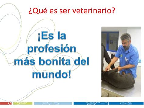 Quiero trabjar como veterinario clinico: ¿Como es la ...