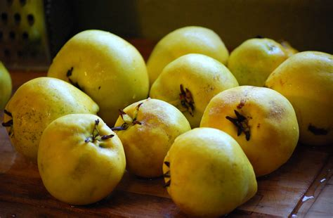 Quince, no longer a mystery | Smith & Lever
