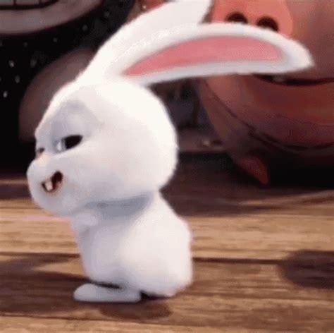 rabbit gif 10 | GIF Images Download