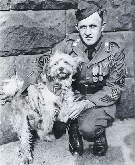 rags the war dog history famous dog ark animal centre ...