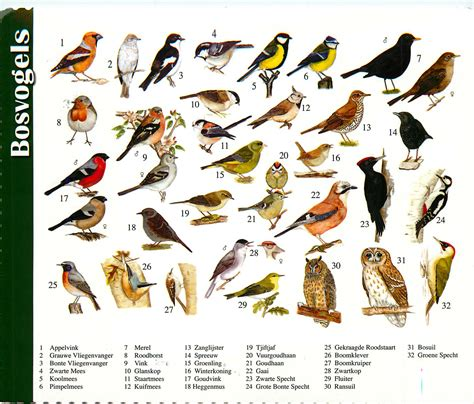 Rainforest Birds Names