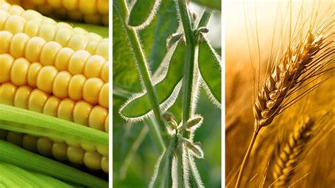 Rainy Season and Records for Grain Markets ...
