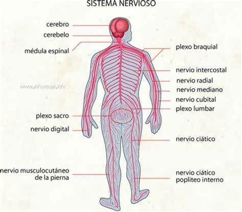 Ranking de Sistemas y Aparatos del Cuerpo Humano - Listas ...