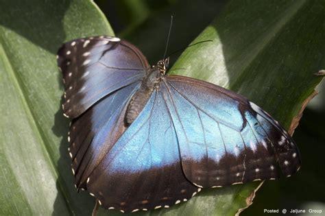 Rare Butterflies..