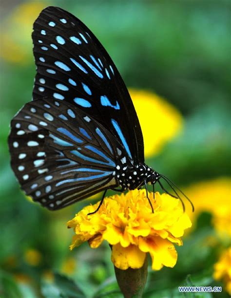 Rare butterflies show held in China's Changsha (1/6 ...
