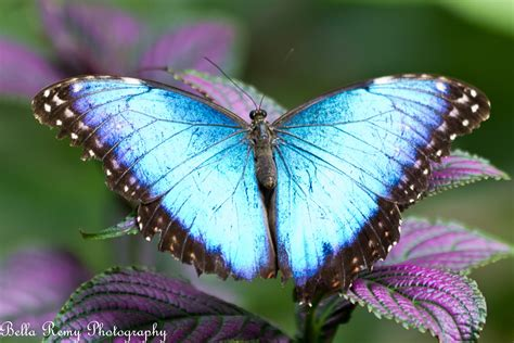 Rare Butterfly Species | www.imgkid.com - The Image Kid ...