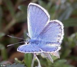 Rare butterfly thriving after surviving huge habitat fire ...