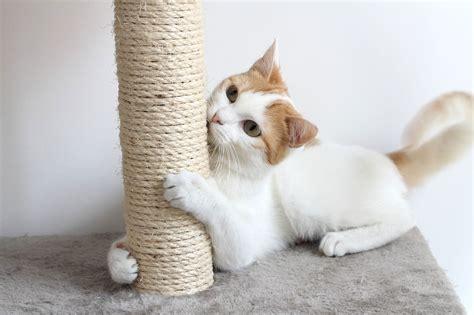 Rascadores caseros para gatos   Decogarden