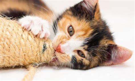 Rascadores de gatos caseros   Decogarden
