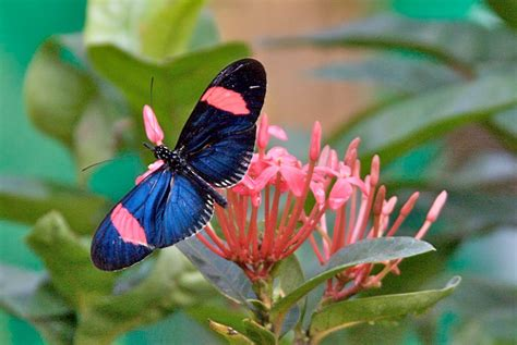 Real Colorful Butterflies On Flowers | www.imgkid.com ...