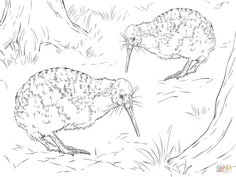 Realistic Little Spotted Kiwi coloring page | Free ...