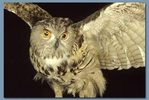 RECUERDOS DE LA ABUELA E HIJO: Aves Nocturnas