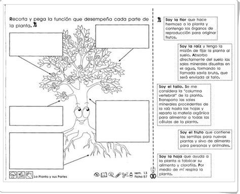 Recursos didácticos para imprimir, ver, leer:  La planta y ...