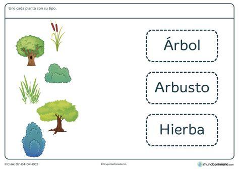 RECURSOS DIGITALES: Flipeando las plantas para 2º de primaria