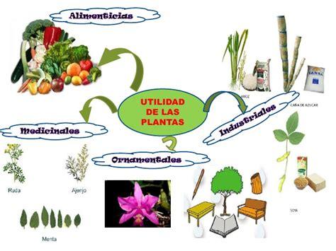 Recursos   Las Plantas