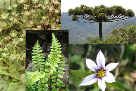 Recursos para conocer el reino vegetal | Eniac