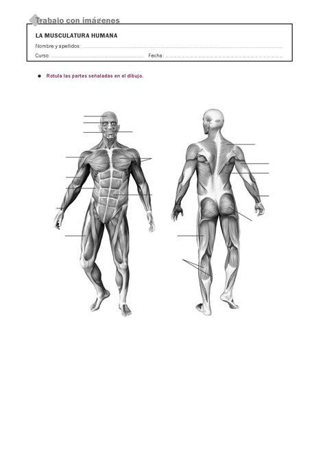 RECURSOS PRIMARIA | Láminas mudas del cuerpo humano ~ La ...