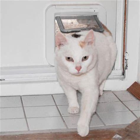 Redes y gateras para gatos en zooplus