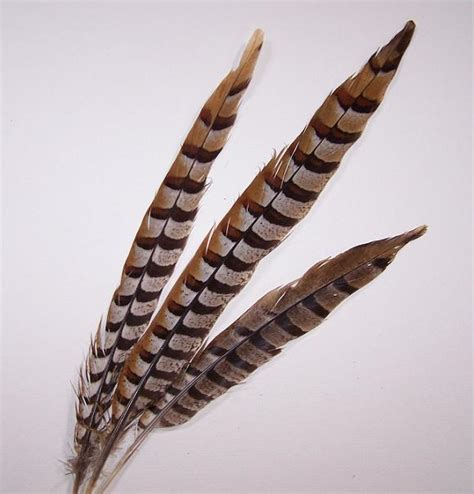 Reeves Pheasant Tail Feathers - Continental Feathers