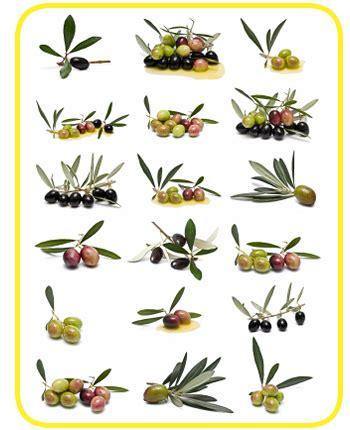 Reficesur   Aceite de oliva