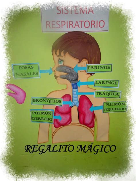 Regalito Mágico: Sistema Respiratorio