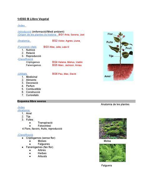 Regne Vegetal 1r B by sergi Pascual - Issuu