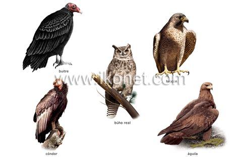 reino animal > aves > ejemplos de pájaros imagen ...
