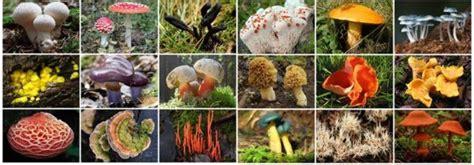Reino de los Seres Vivos: moneras, protoctistas, fungi ...
