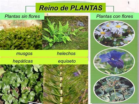 Reino de PLANTAS Plantas sin flores Plantas con flores ...