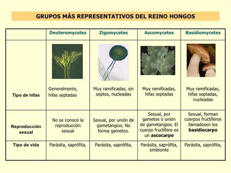 Reino fungi generalidades