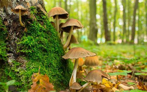 Reino Fungi   Información y Características