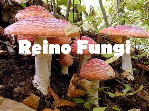 Reino Fungi.   ppt descargar