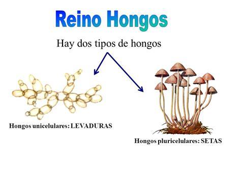 REINO FUNGI. - ppt video online descargar