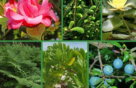 Reino Plantae - O Estudo das Plantas e Vegetais | Busca ...