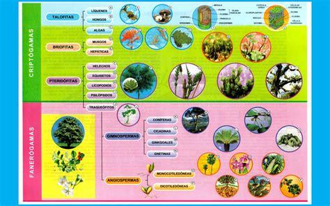 Reino Vegetal - imagenes - wallpapers - Laminas escolares ...