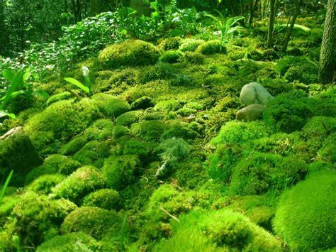 Reino vegetal (Metaphita, plantae) - Escuelapedia ...