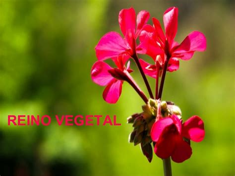 Reino vegetal.